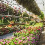 12 Sun Resistant Plants For Summer